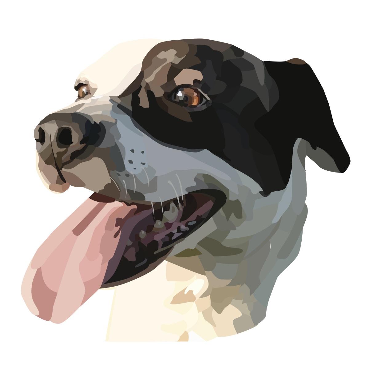 Dog Illustration Gabi C Moore